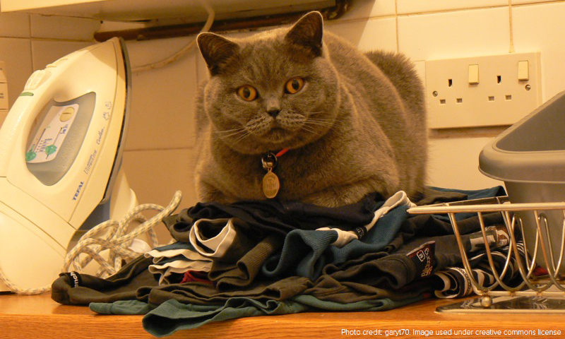 While the fat cat sits there, no ironing can be done.